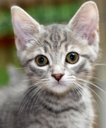 See our Cats for Adoption on Pet Finder